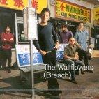20010131044837-wallflowers